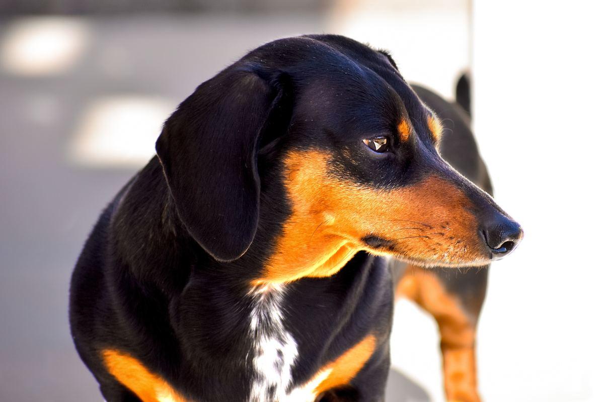 Does your dog need training?