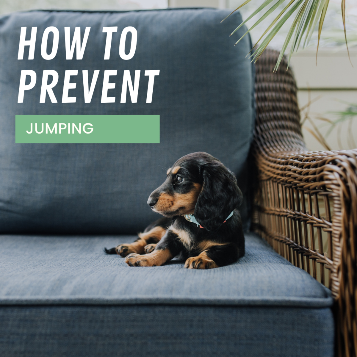 Stop your dog from jumping onto furniture.