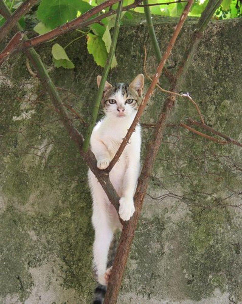 Cats are amazing escape artists!