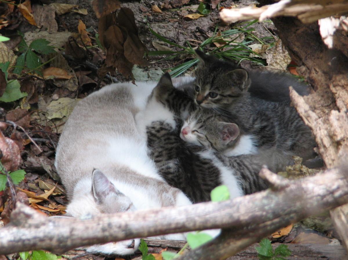 Birdie with her babies