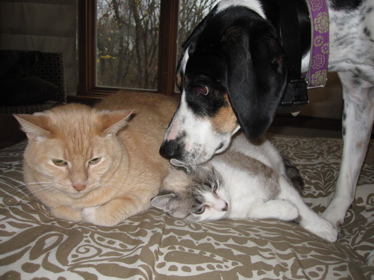 "The cats ""tolerate"" the dog."