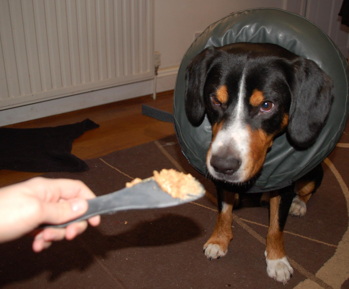 Can the inflatable cone pass the peanut butter on paw test?