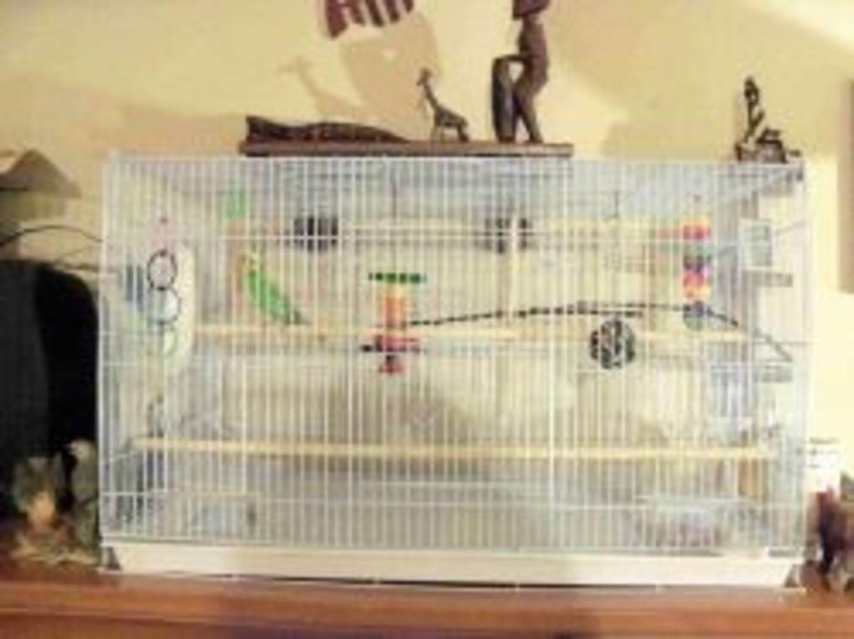 Parakeet cage.