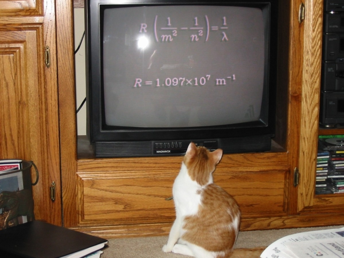 Dakota watching his favorite physics program.
