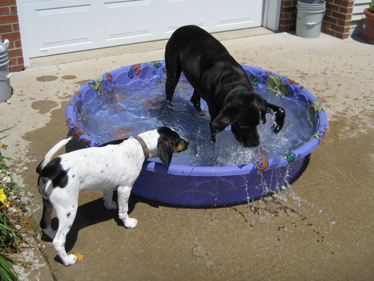 Turley and Lucy playing in their pool