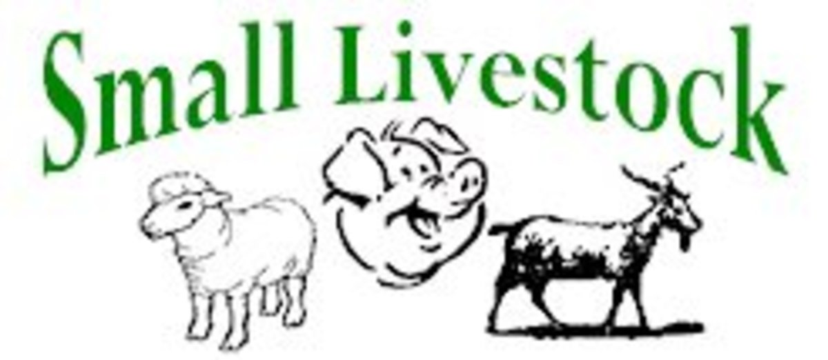 Small Livestock: All About the Different Kinds of 'Miniature'  (or just plain small)Farm Animals
