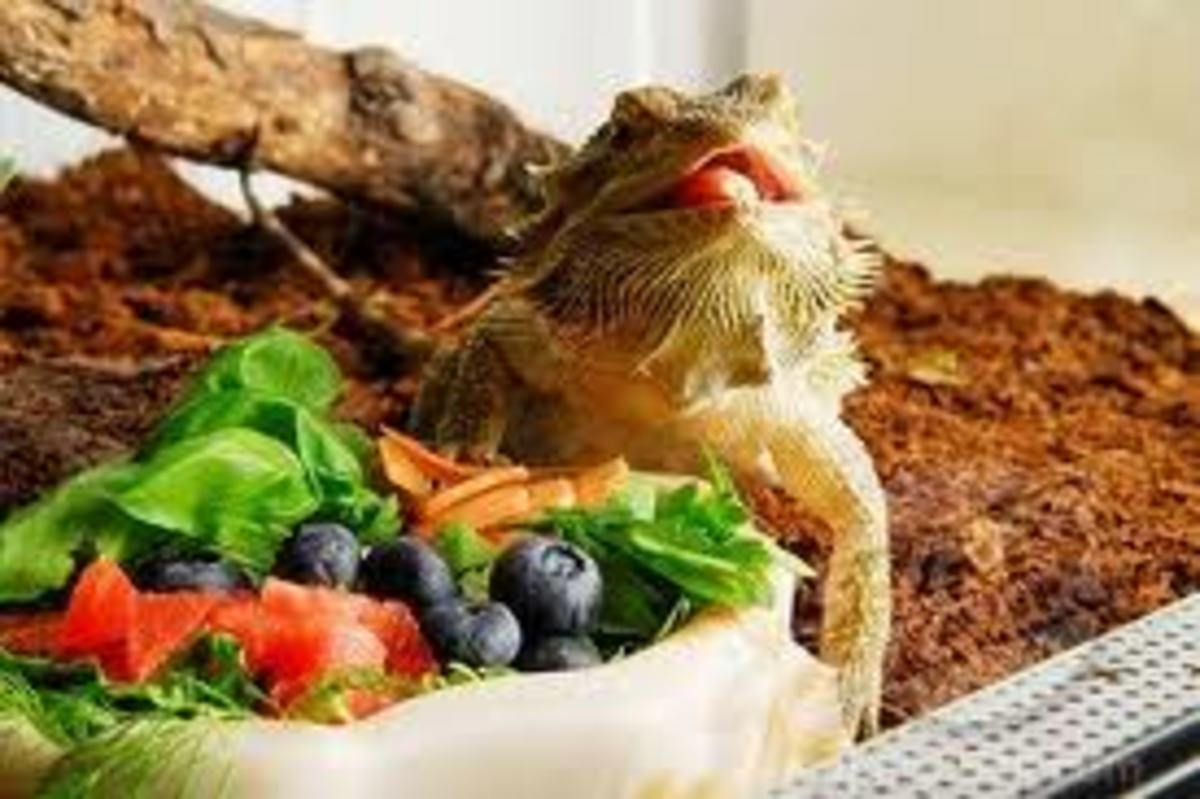 A meal fit for a king! ...Or a dragon.