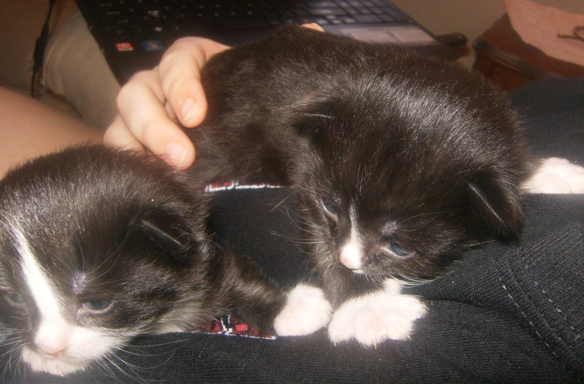 Tux (on the left) and Binx (on the right) at 13 days old.