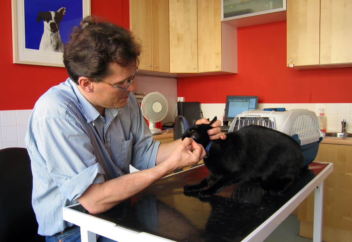 A vet's treatment is always the best option for a cat.