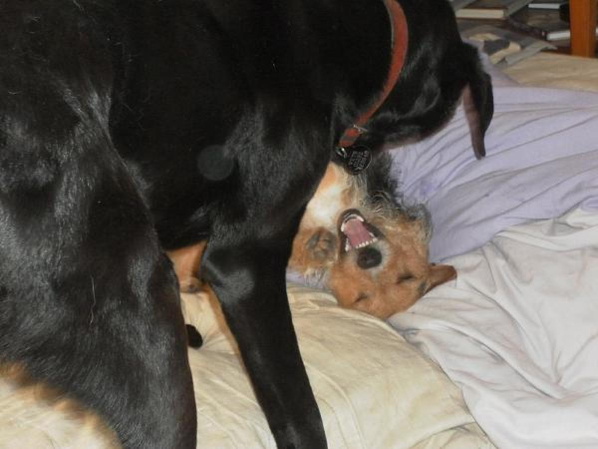 Bruno rolls Bob on the floor