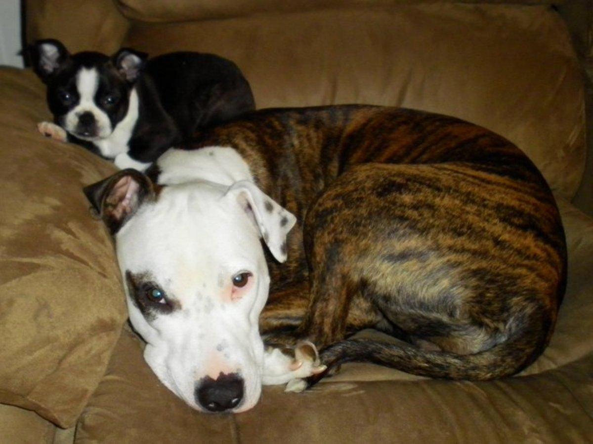 Lola cuddling with her best friend, Audi.