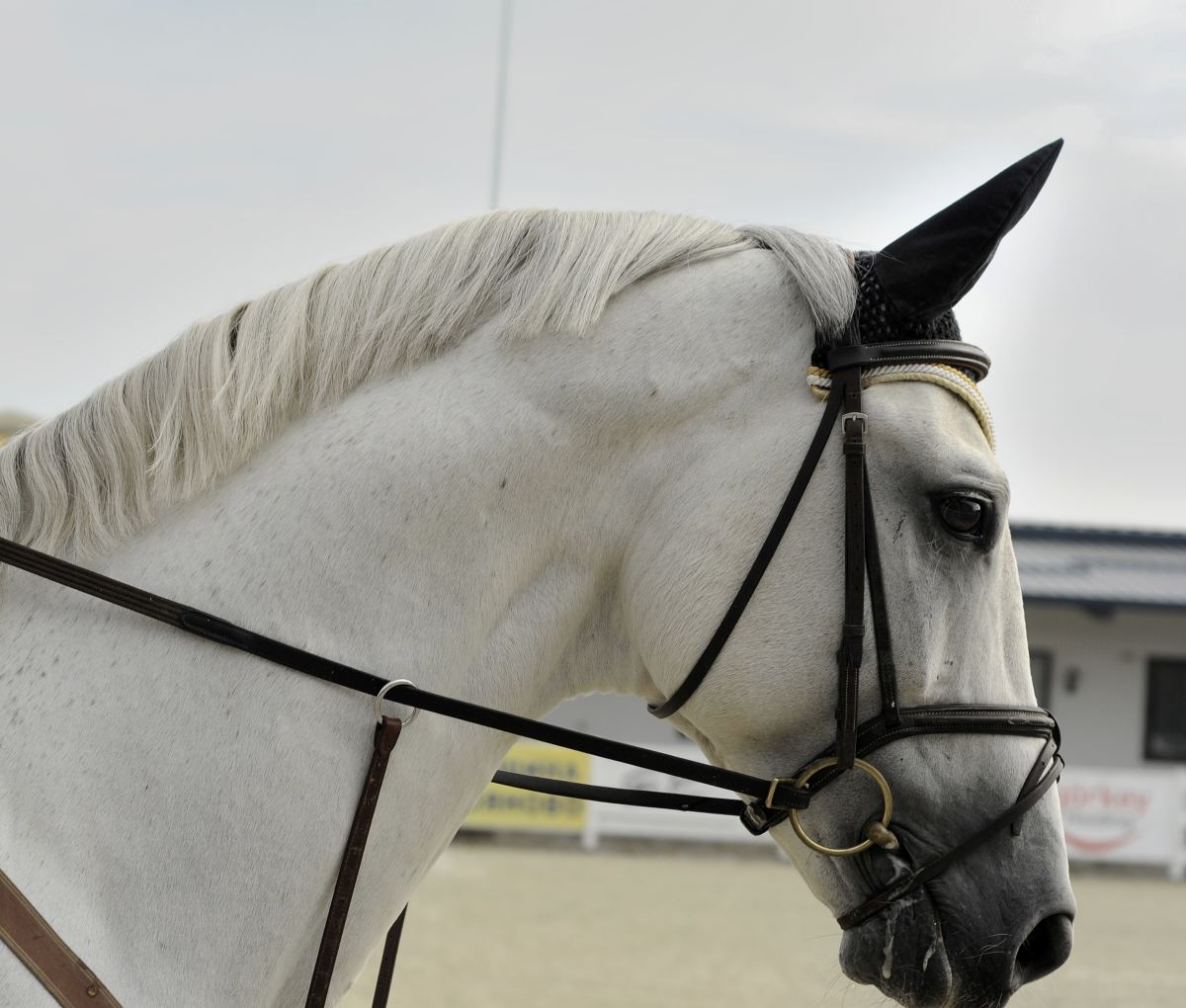 One can see from the side why a bridle may be tricky to put on for some unruly horses.