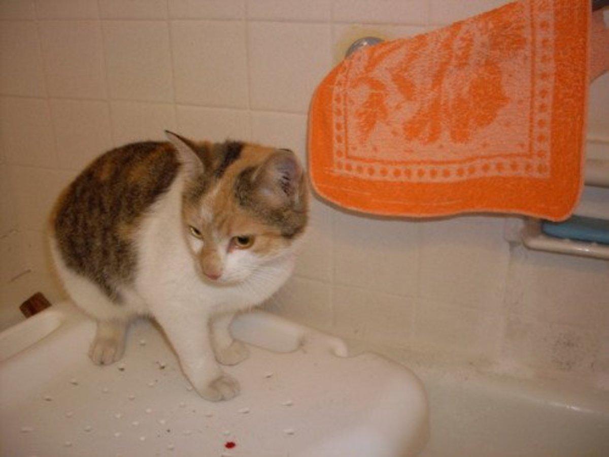 uti medications for cats