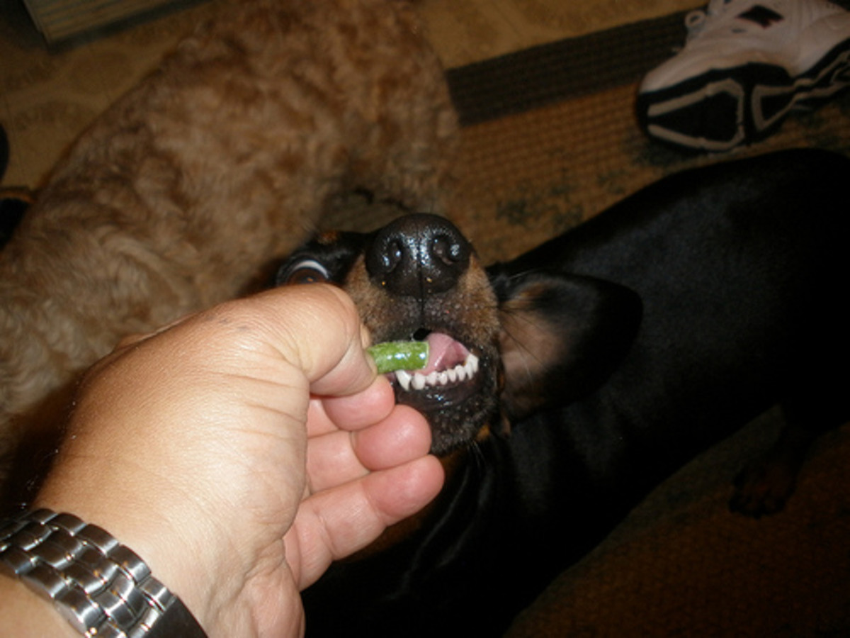 Eating a green bean