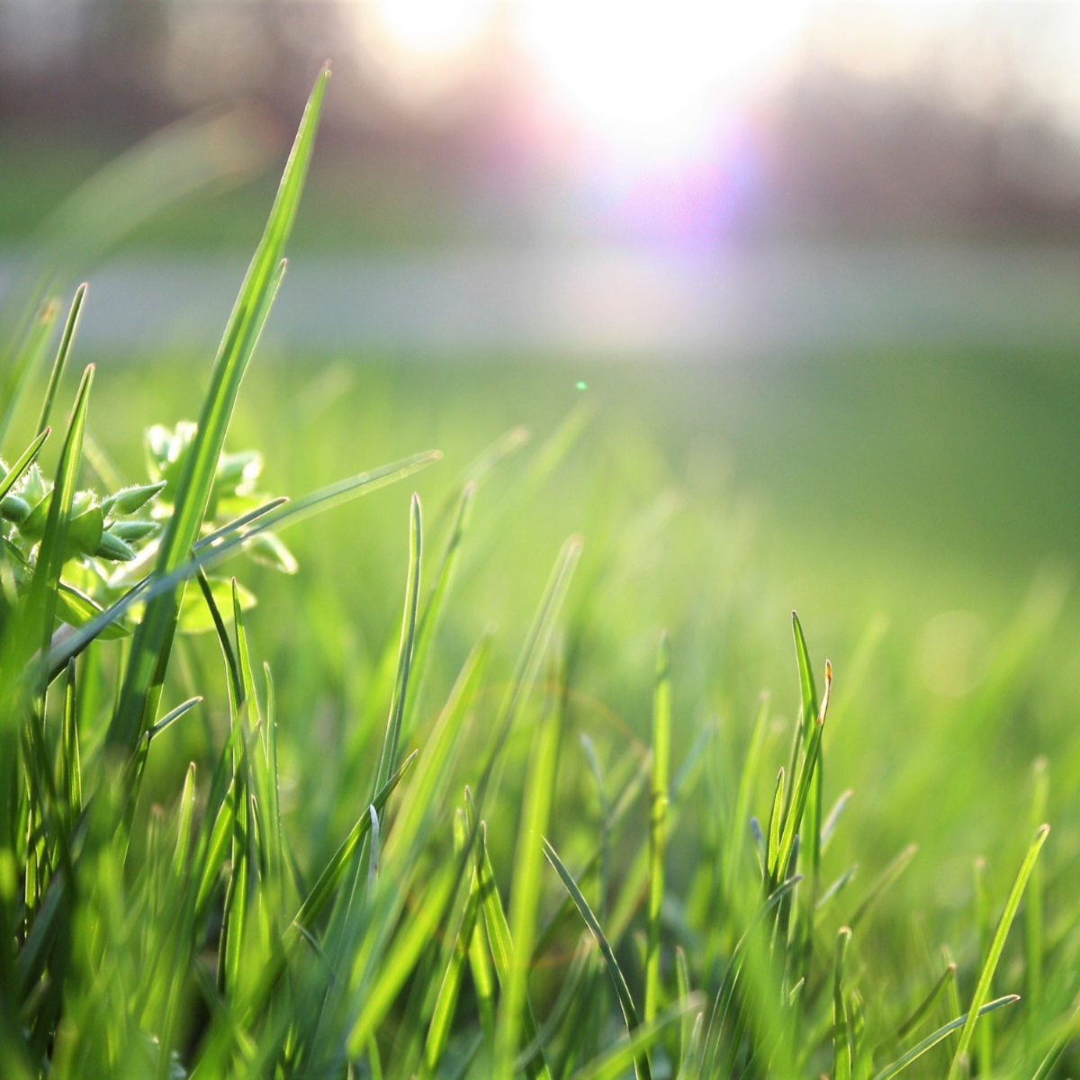 Dogs naturally eat grass to settle their stomachs.