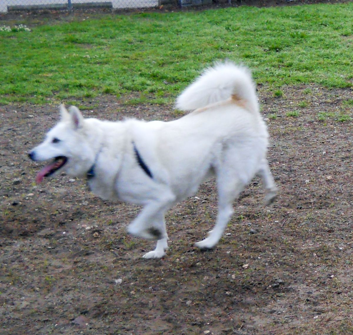 Connor running at the park