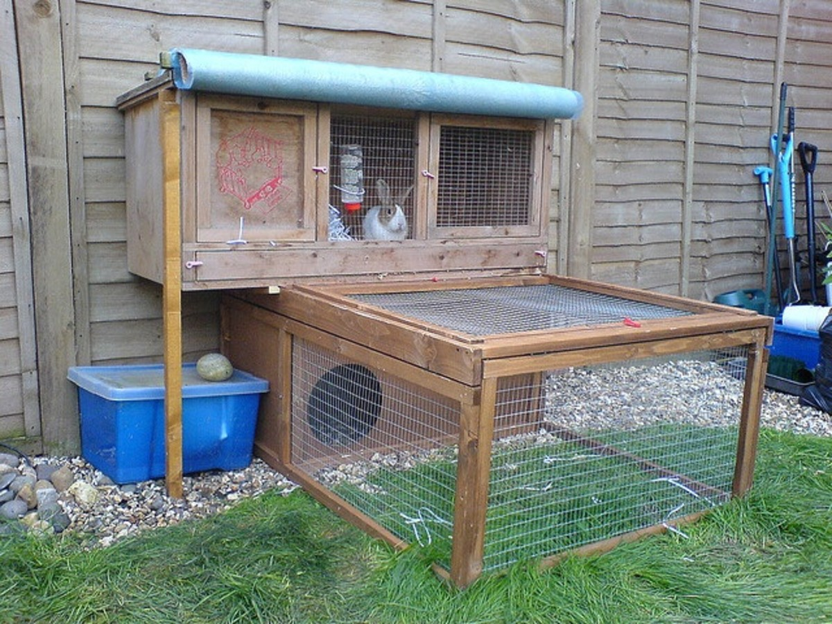 This hutch and pen would be ideal for a guinea pig kept outdoors.