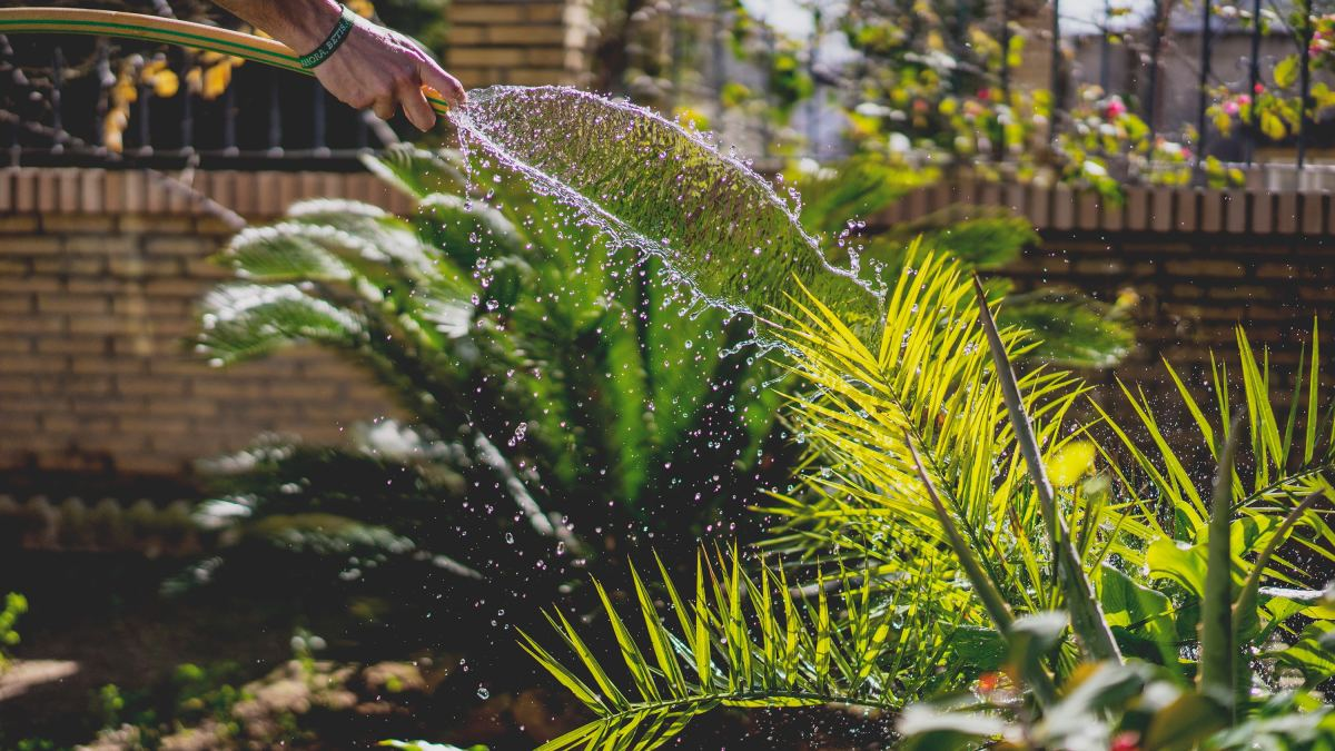 Flooding your yard is a great way to get rid of fleas as well as flea dirt.