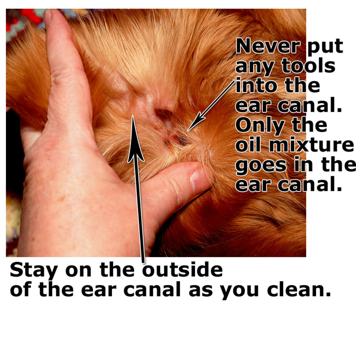 The ear canal of a dog is very sensitive, never put any tools inside the canal, only oil treatment.