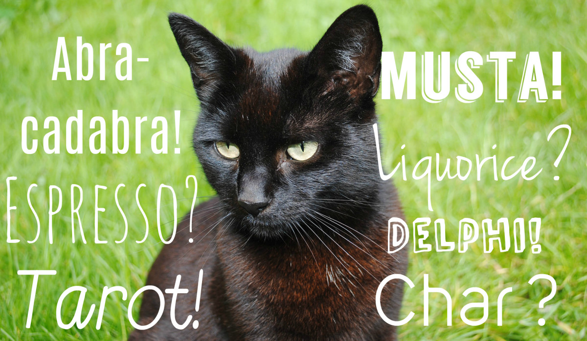 cool-unique-and-creative-black-cat-names-for-your-beloved-pet