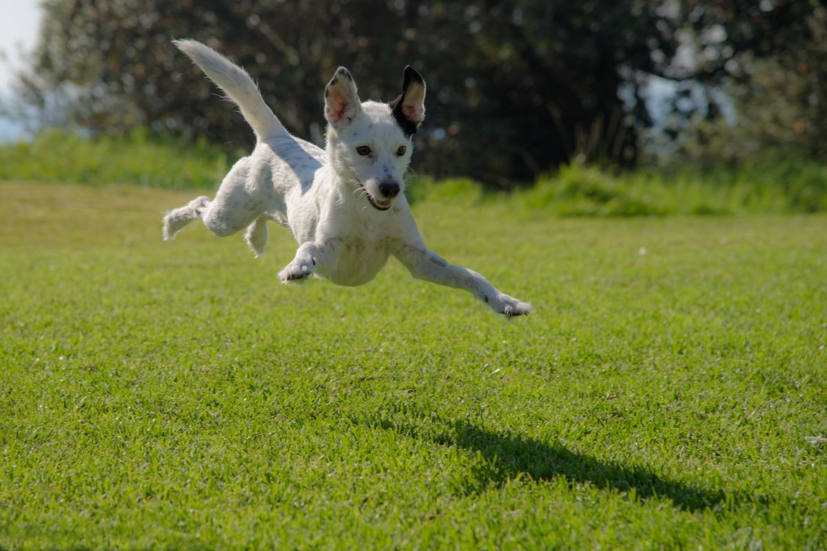 Energetic dogs may be jumping up to greet you out of affection.