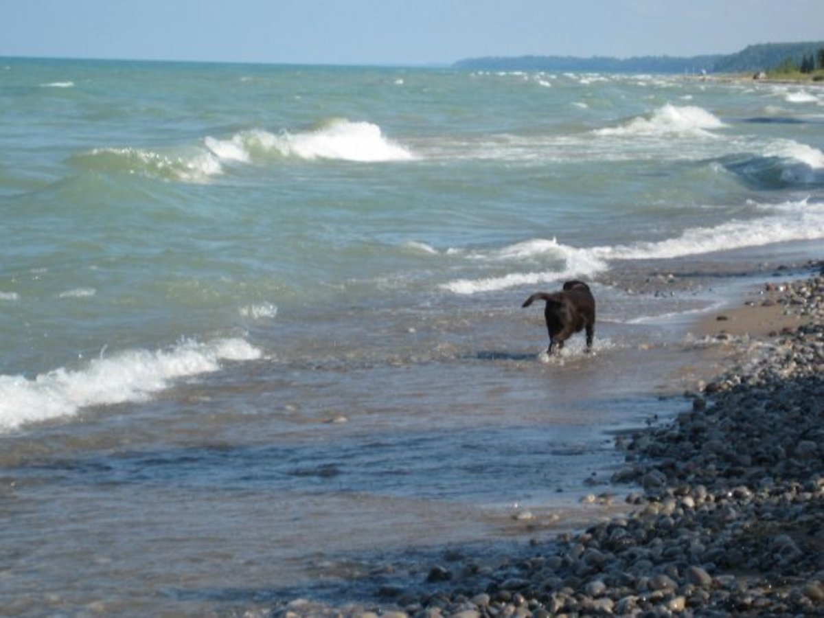 Zoey walking in the waves of Lake Huron.