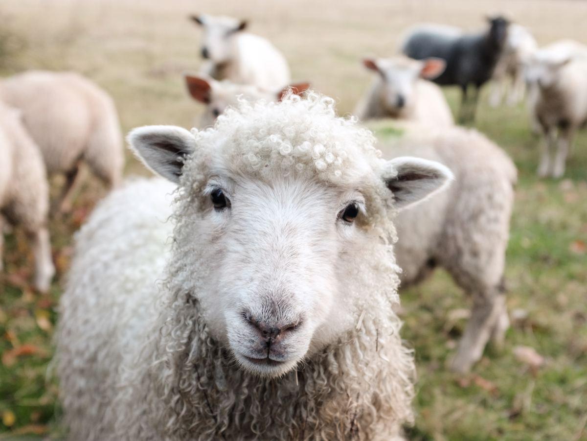 Humane farming practices produce better pet foods.