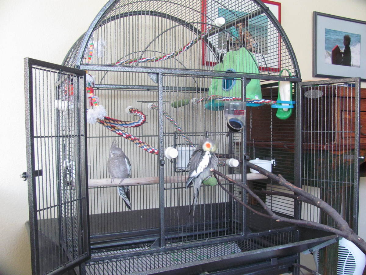 My birds' cage is replete with plenty of rope perches.