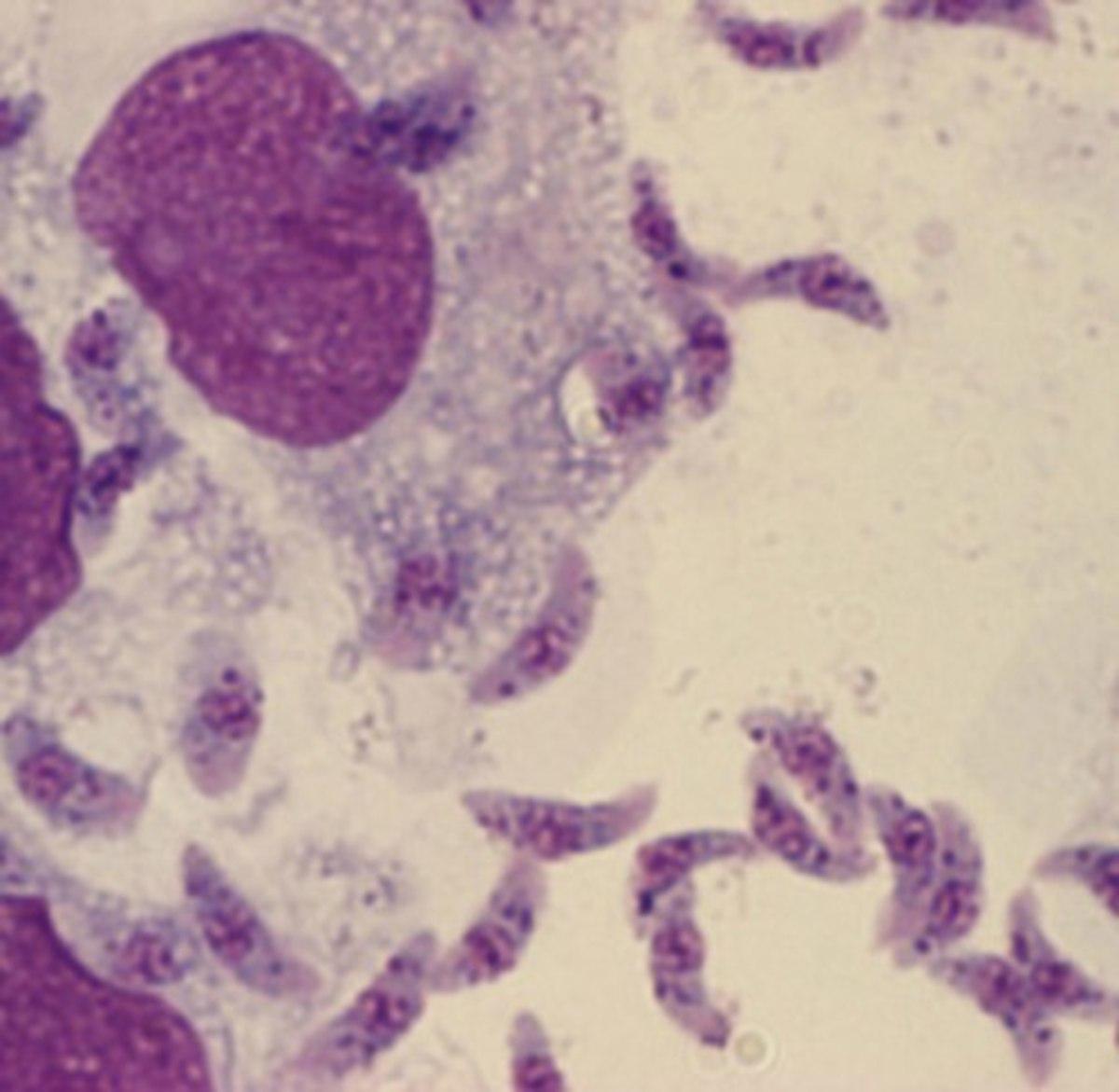 Cat parasites . . . fun.
