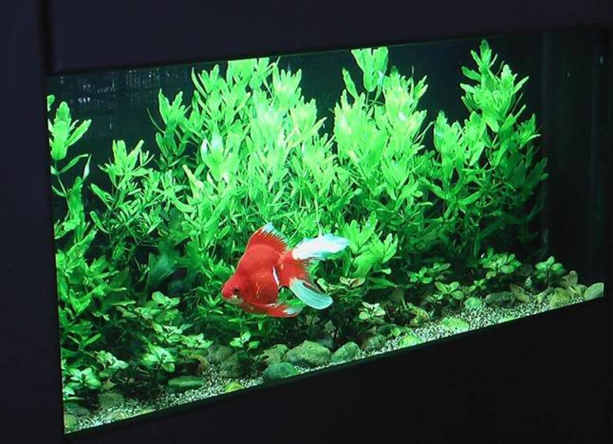 The ideal tank for a goldfish is, above all, a TANK, with adequate circulation and fresh plants. It is also most likely out of your price range and level of patience.