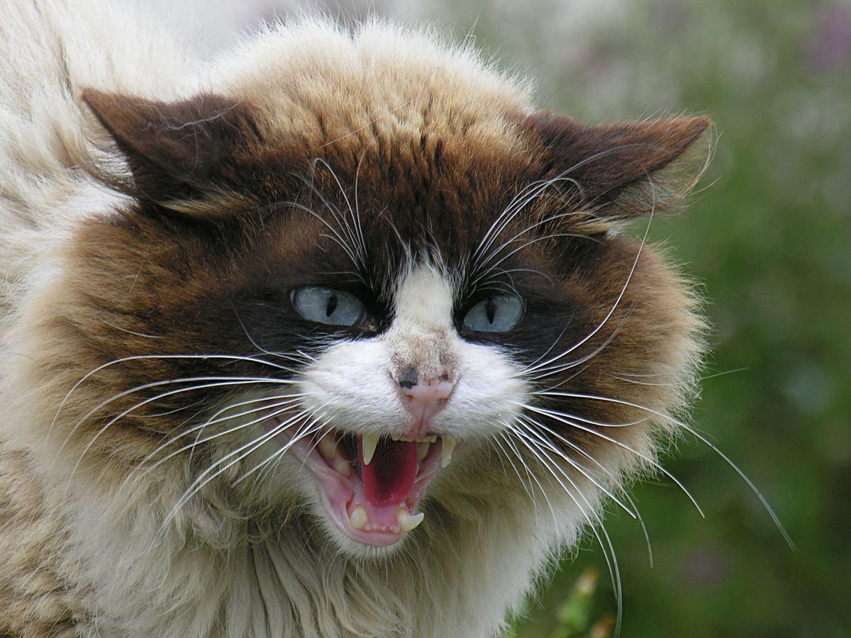 Mad cat.