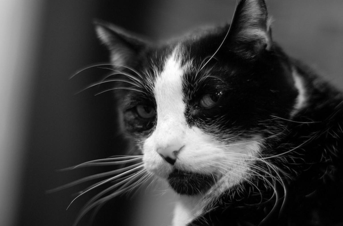 Bossy cat.