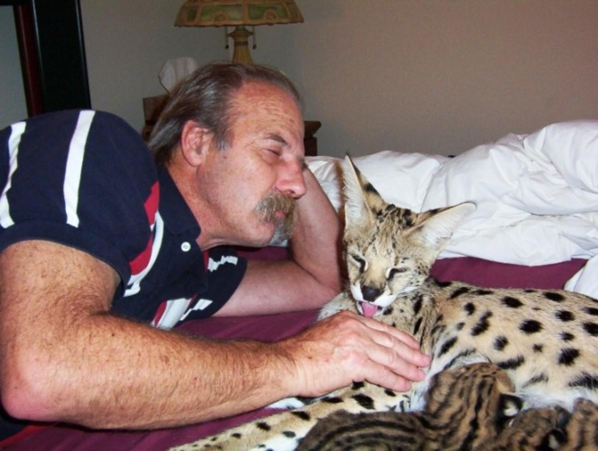 A Pet Serval
