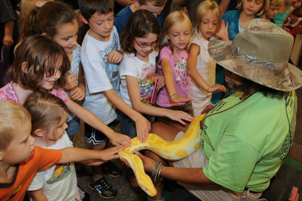 Burmese python at a reptile demonstration held at a library.