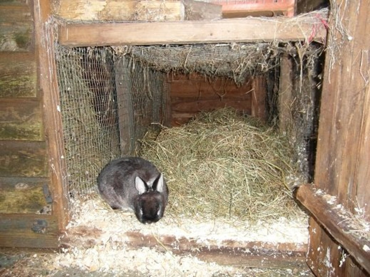 A section of the shed has been partitioned off to give a spacious bed area for a dwarf rabbit.