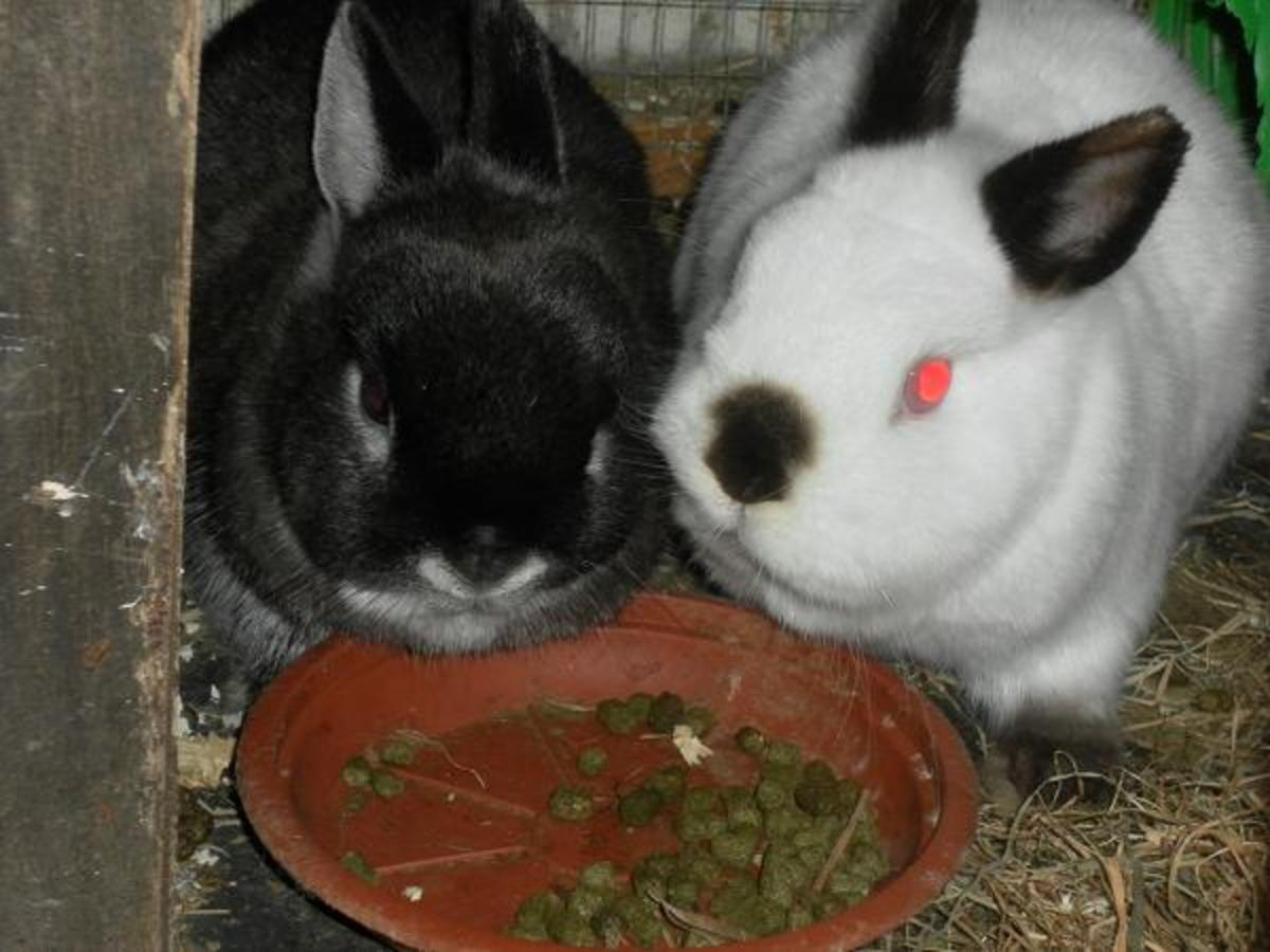 Most rabbits enjoy having company of their own kind.