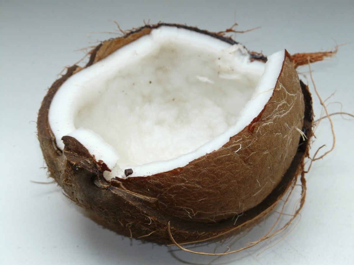 Coconut Oil for Dogs and Cats? The Bad and Good
