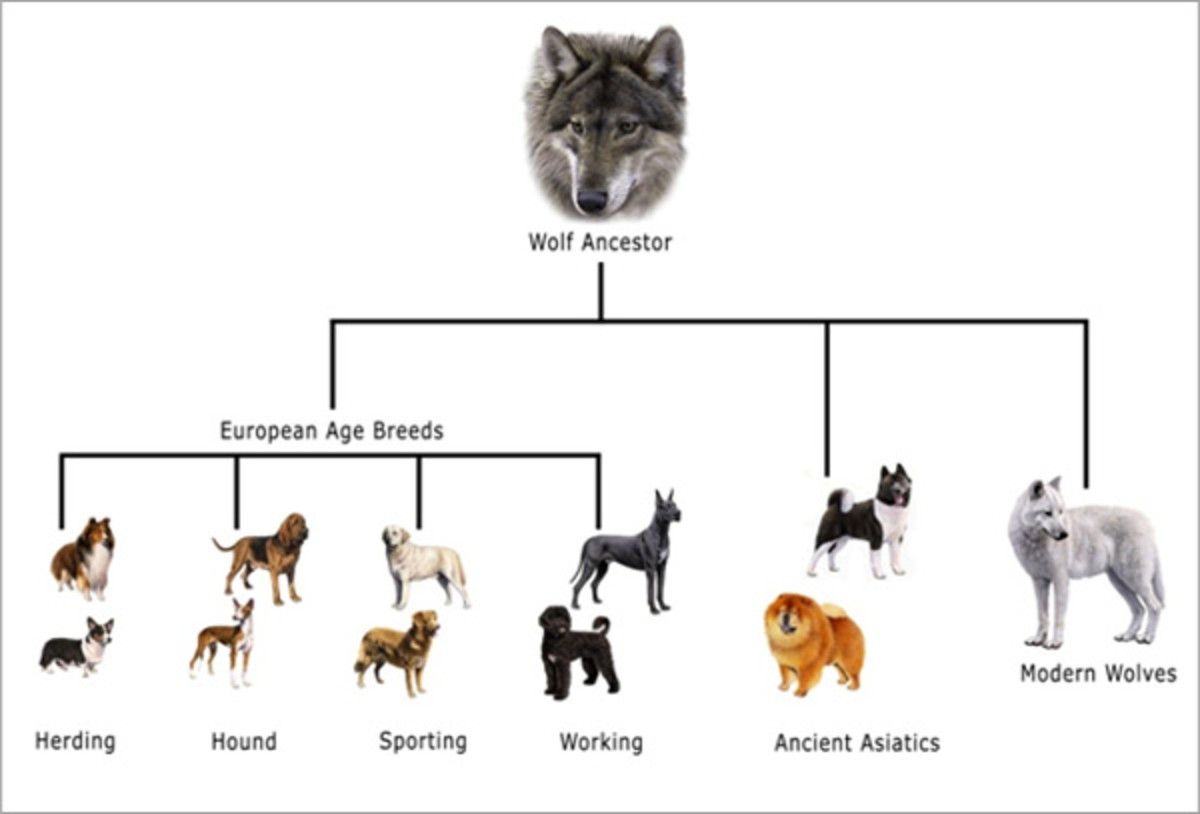 Evolution of Dogs
