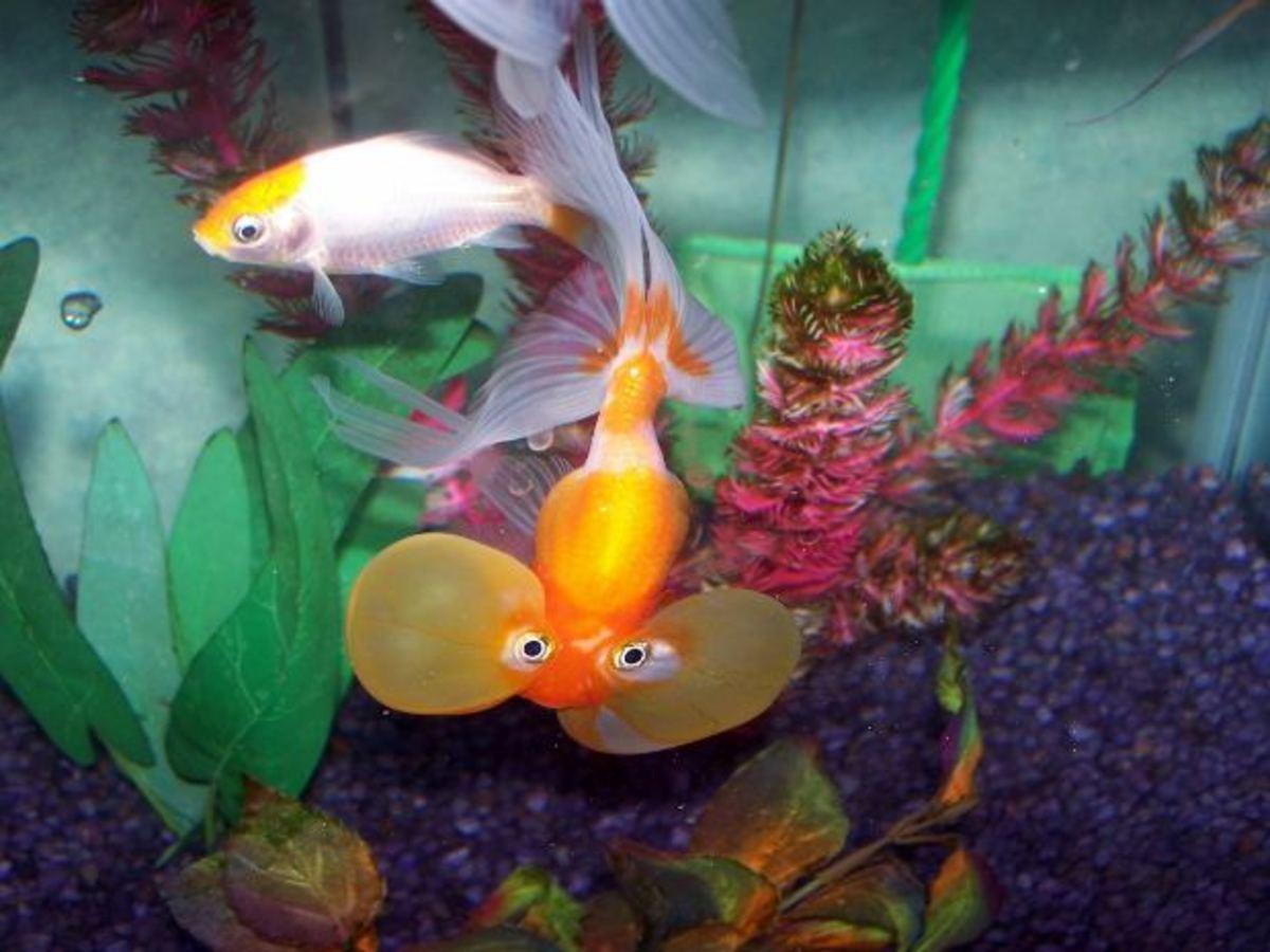 Nemo doesn't deserve a toxic tank!