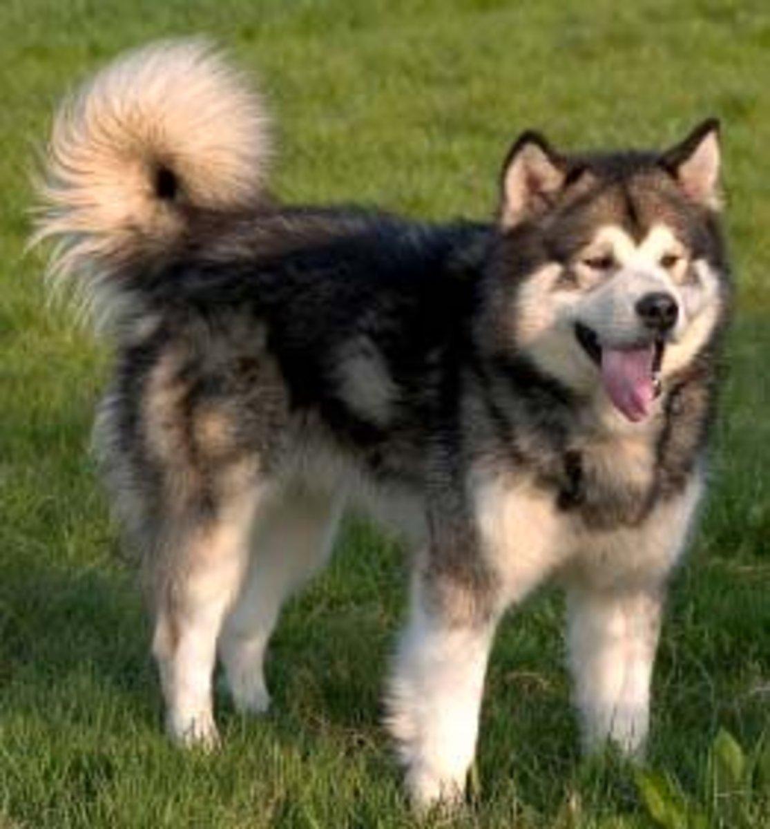 Gansis Perlu Tau Inilah 8 Ras Anjing Paling Agresif Menurut Ane
