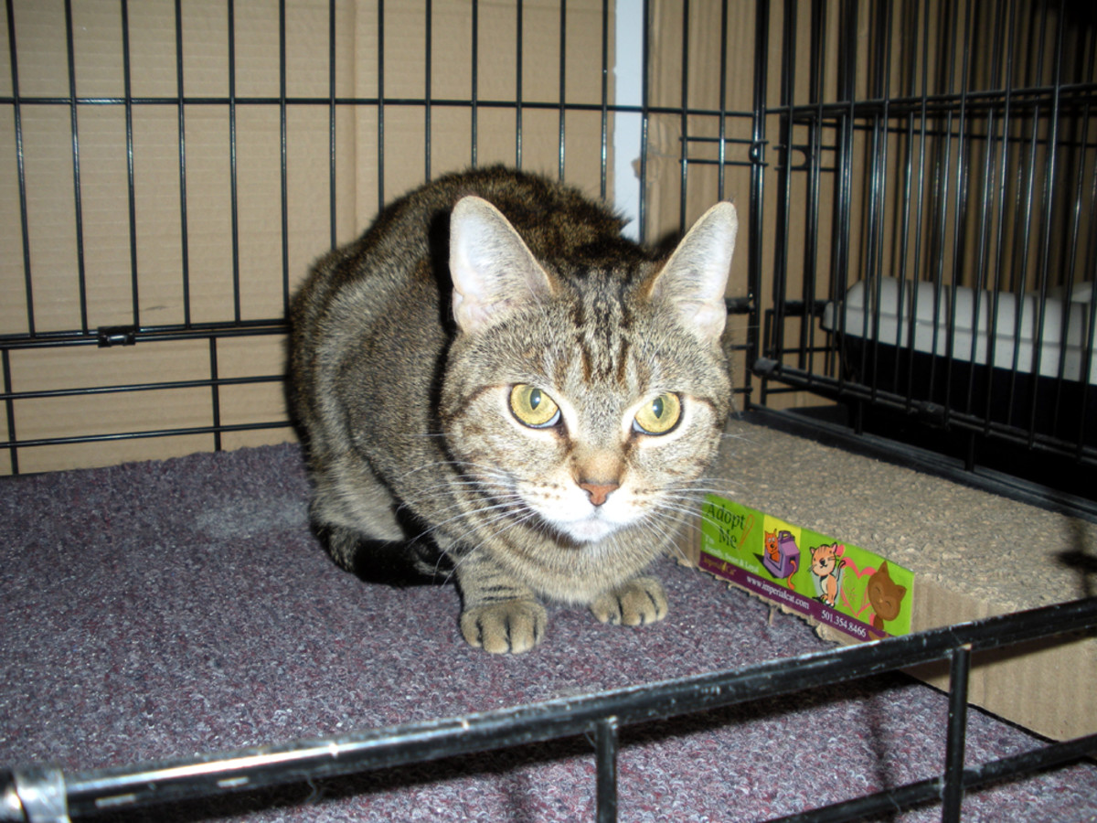 Nelly is about 4 or 5 years old, and is very depressed at finding herself living in a cage.  She'd love to go home to a lap insead.