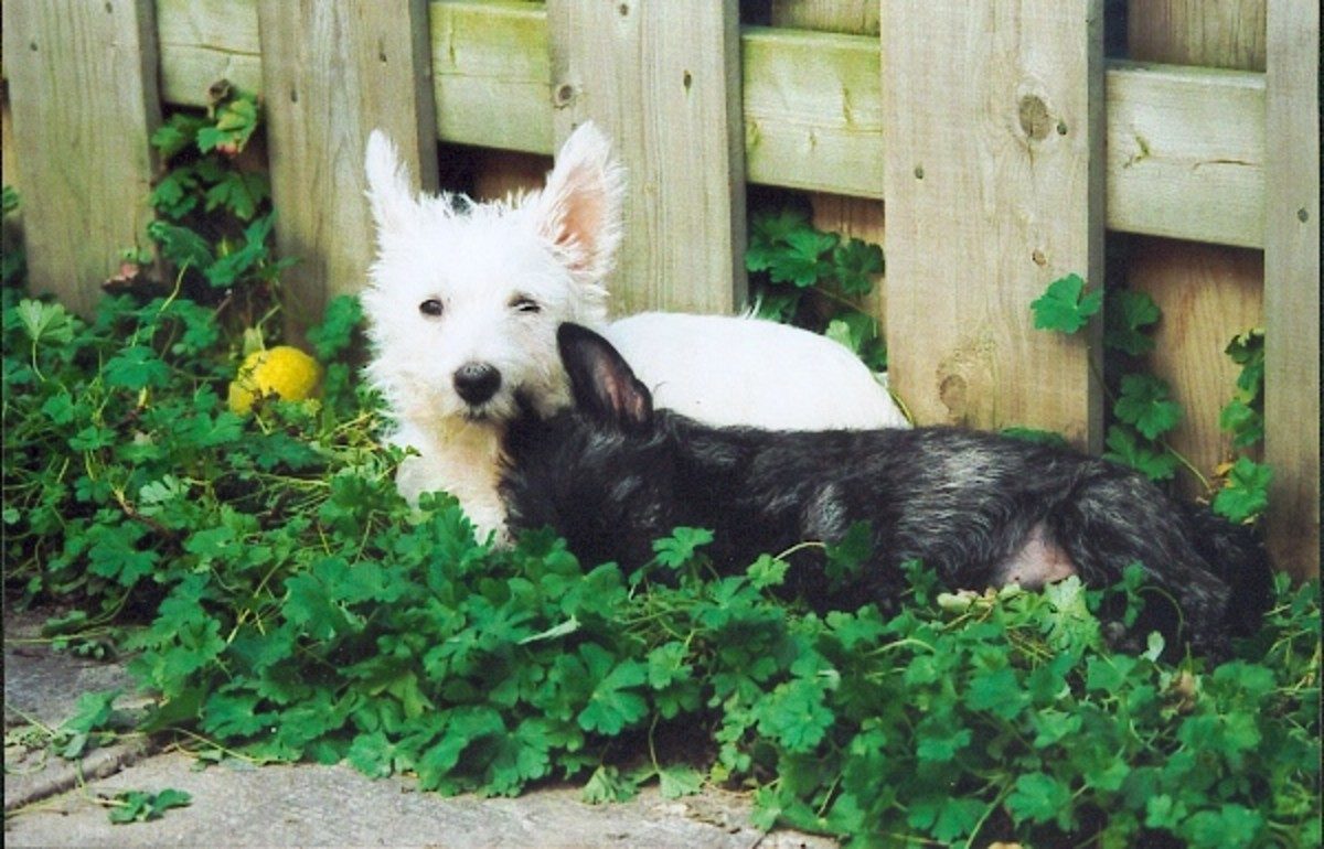 Dogs will sleep anywhere; make sure you do not have poisonous plants anywhere a dog can go.