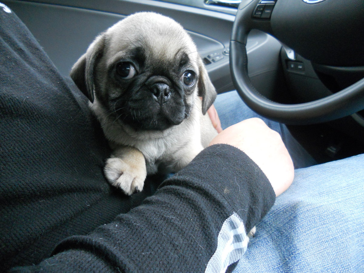 Getting ready to drive home with Malcolm