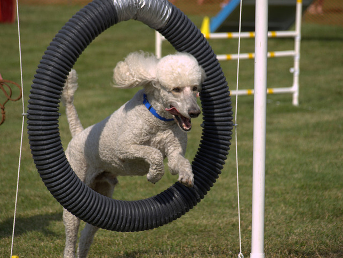 Does the ability to jump through hoops make you intelligent?