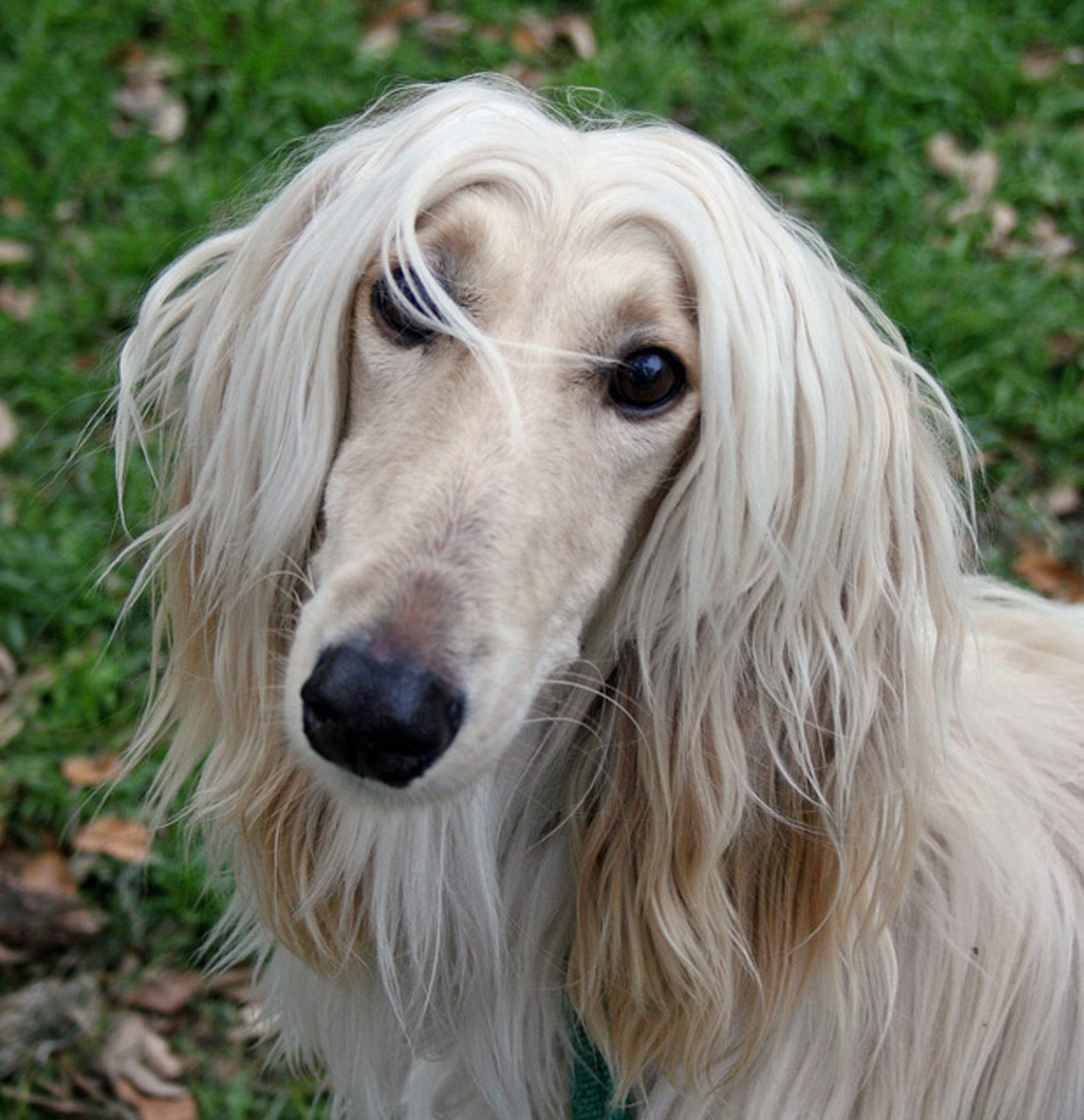The experts in the canine world have determined that this is the most stupid dog breed. Really?