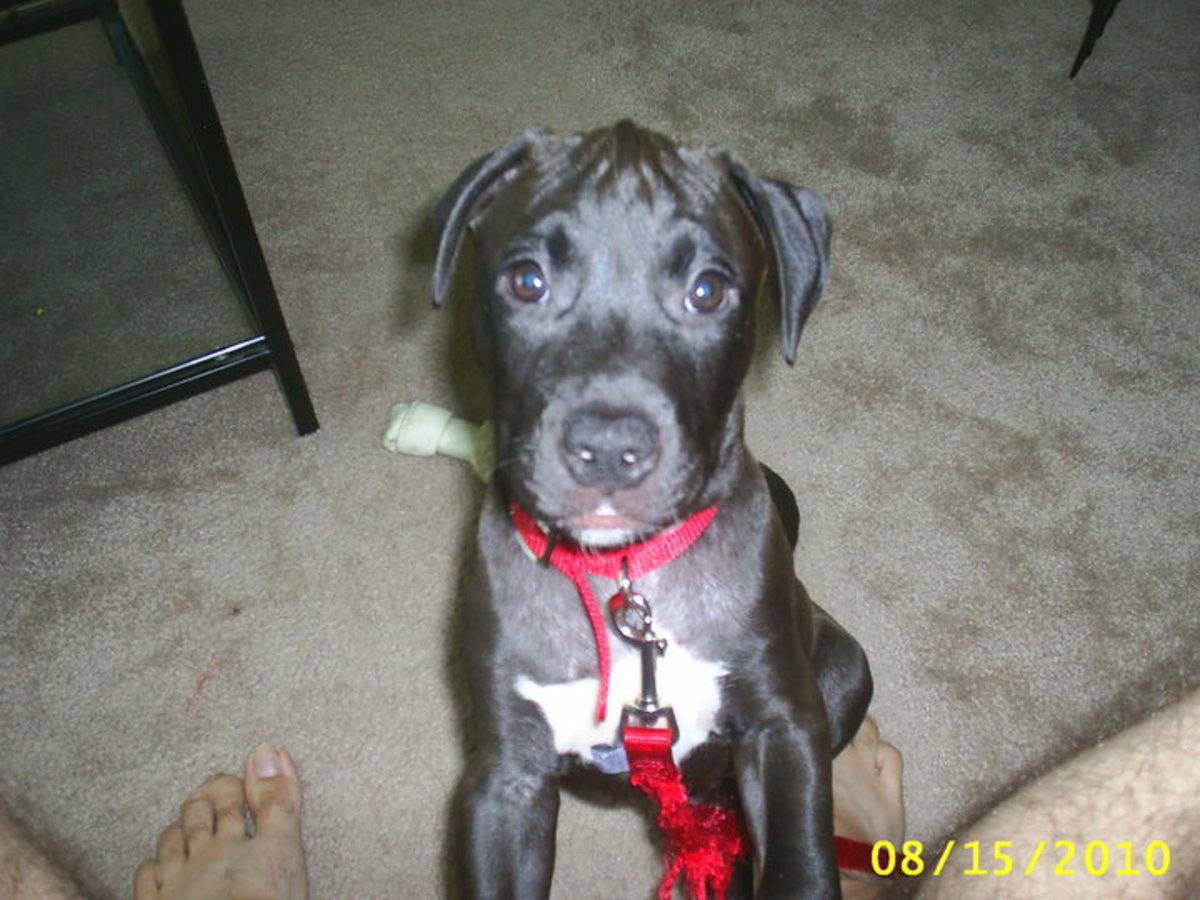 Dakota at around 12 weeks old.