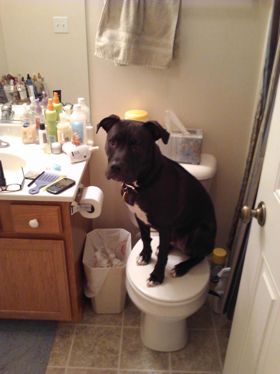 Dakota decides to hang out on the toilet.
