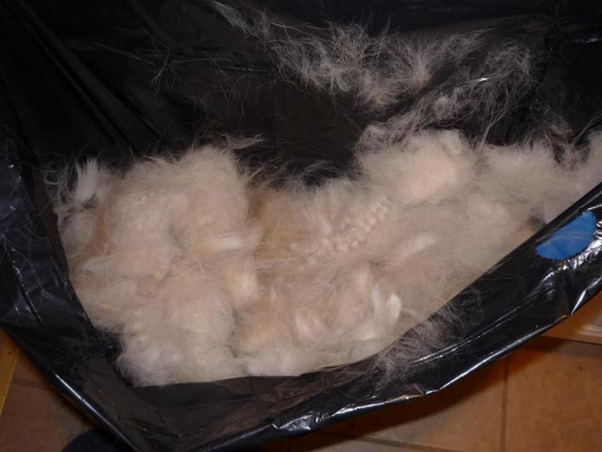 "An example of Sophie's undercoat that comes off of her when she ""blows"" her coat in the spring."