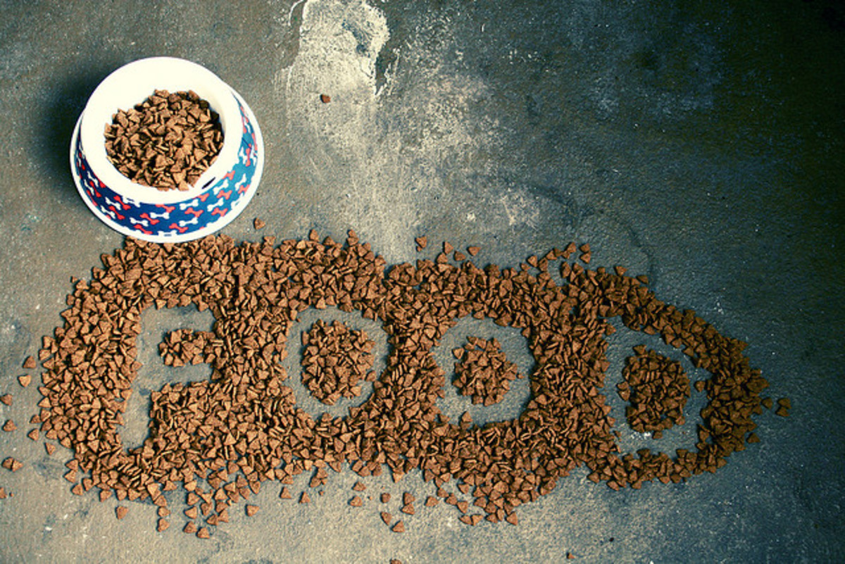 can-i-feed-my-dog-table-scraps