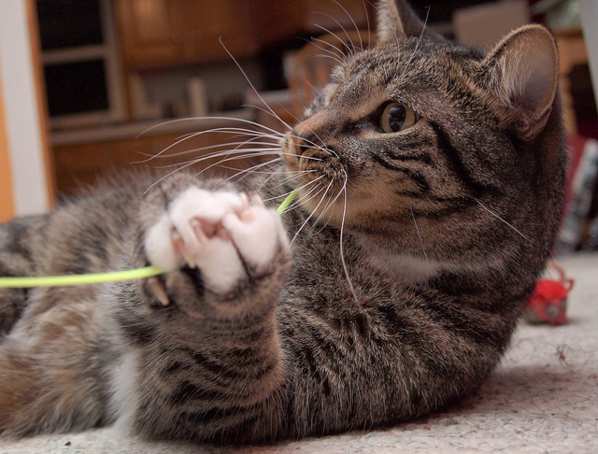 Cats grasp and hold with their paws and claws